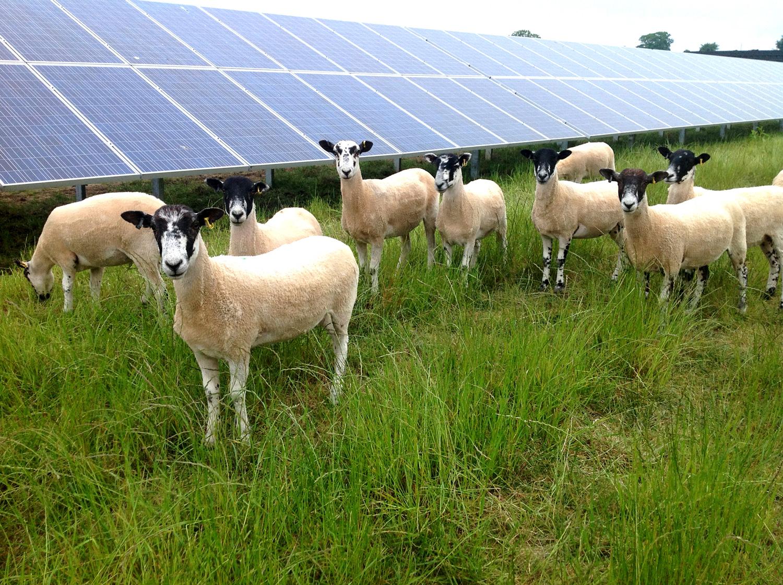 Farmers awaiting solar subsidy build pressure on Irish government