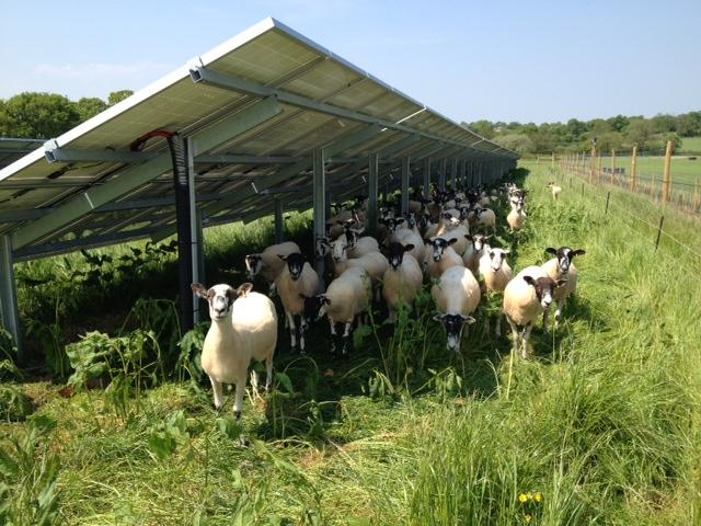 Biodiversity Focus For Potential 6 5mw Devon Solar Farm