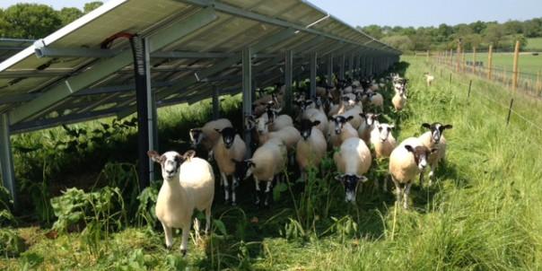 19mw Scottish Solar Farm Wins Planning Permission Solar