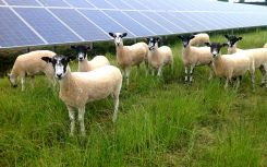 Farewell FiTs: Community solar on a cliff edge without a feed-in tariff